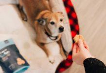 Doctors-Suggest-Avoiding-While-Buying-Dog-Treatsm-on-DependableBlog