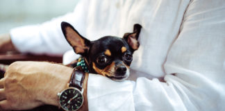 Things-You-Have-to-Ensure-before-a-Confirm-a-Pet-Sitter-on-dependableblog